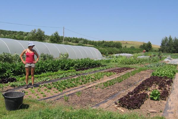Organic Horticulture